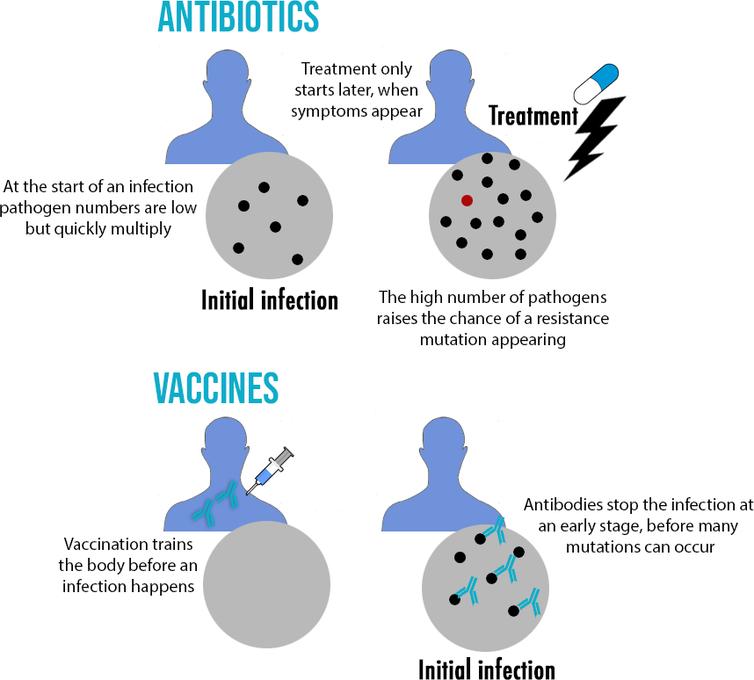 Graphique montrant que plus il y a de pathogènes présents lors d'une infection, plus il est probable qu'une mutation de résistance se produise
