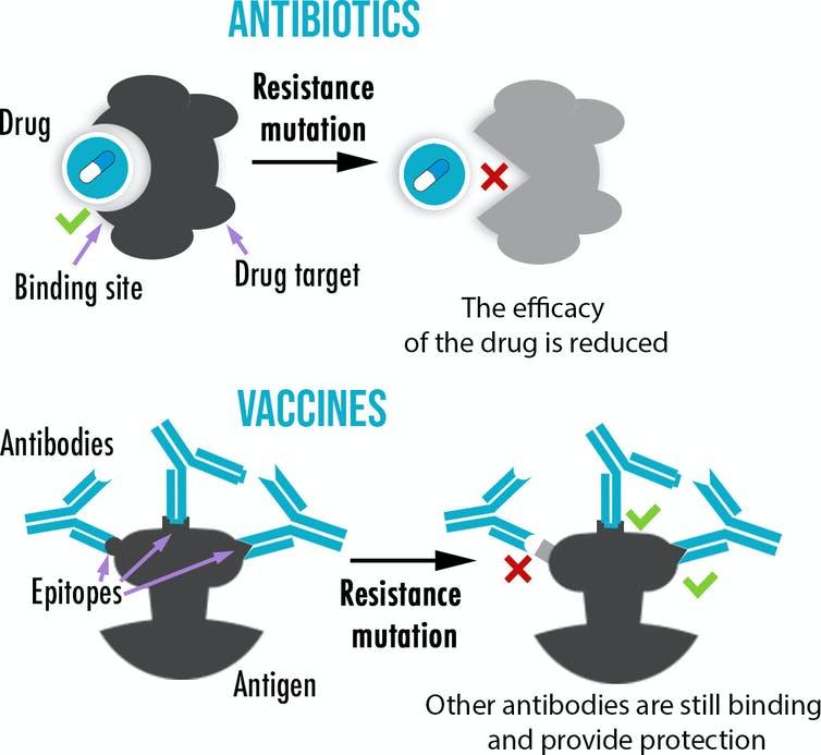Graphique montrant qu'alors que les antibiotiques n'ont généralement qu'une seule cible, les vaccins induisent la production de multiples anticorps se liant à diverses parties d'un antigène, rendant ainsi l'évolution de résistances plus difficile